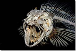 AngryFishSkeleton